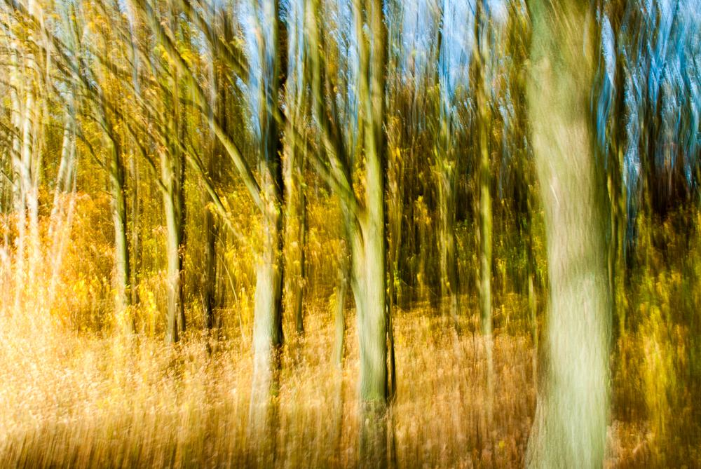 Herbstwald © Fotokunstwerk von Mirko Joerg Kellner