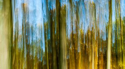 Herbstwald-Panorama